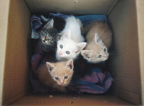empress-megajett:  It's a Kitten Starter Kit.