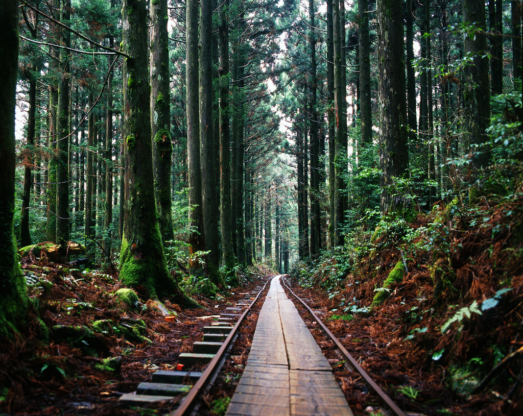 Train tracks in the forest (by popoandrew)