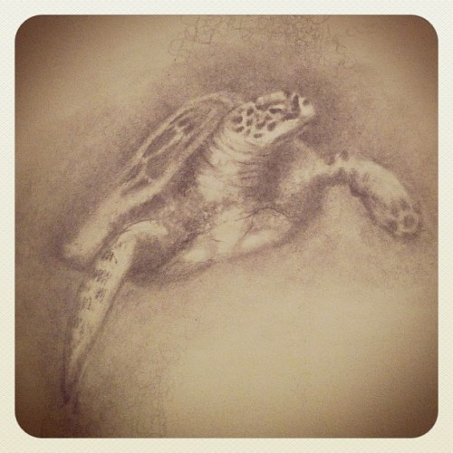 Mister turtle. (Taken with instagram)