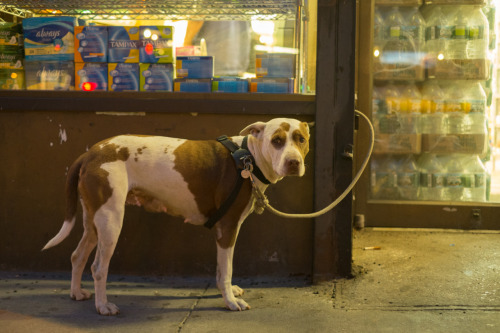 Dog Outside Spyros, New York, NY