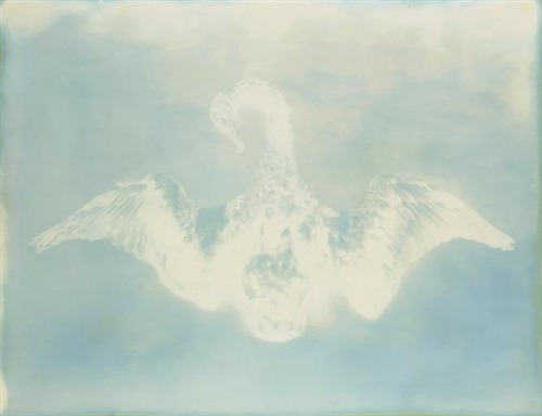 Adam Fuss, Untitlted (Swan) from My Ghost, 2000