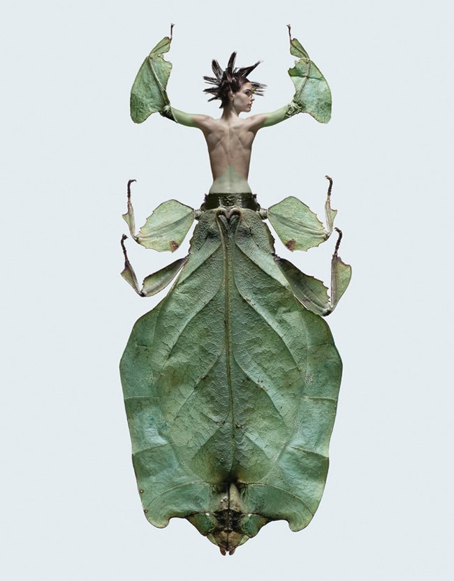 showslow:  Laurent Seroussi, Women Insects.