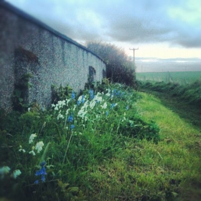Bluebell path #path #bluebells #flowers #wall #sky #clouds #tree #field #dreamy #scotland #scenic #landscape #wildlife #nature  (Taken with instagram)