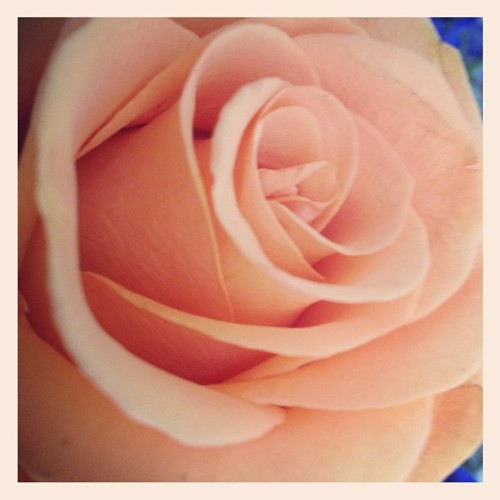 Perfection #rose #loveliness #spring  (Taken with instagram)