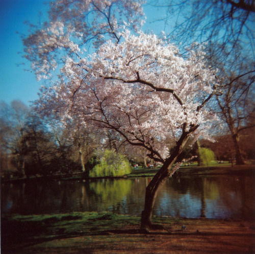 lellite:  London - St-James Park by I wish I had a horse's head on Flickr.