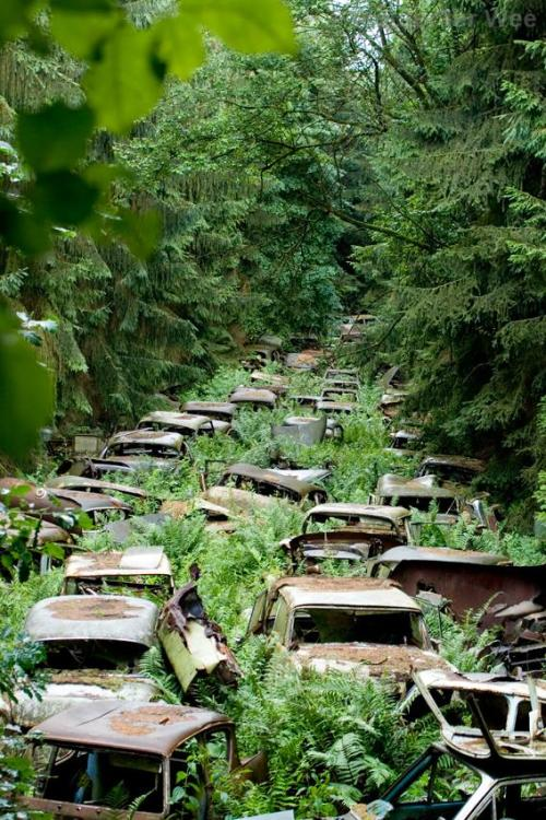 okinawanwarrior:  frootfleye:   Somewhere in a forest,there were cars hidden in the overgrowth, looking like a scene out of a nuclear apocalypse, or a Fallout games. In fact they're in the Ardennes Forest belong to the American service men, after the war they were responsible for shipping their vehicles back of which they could not afford. Instead, the cars were brought up to a clearing in the forest, parked and left.  eerie  eerie indeed.
