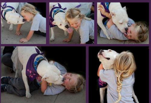 christinaincorporated:  Another Pit Bull attacks a child. When will we open our eyes and see the lasting implications these big, mean dogs are capable of inflicting?