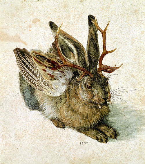 In Bavarian folklore, a wolpertinger is an animal said to inhabit the alpine forests of Bavariain Germany. It has a body comprised from various animal parts — generally wings, antlers, tails and fangs, all attached to the body of a small mammal.  (picture by Albrecht Dürer)