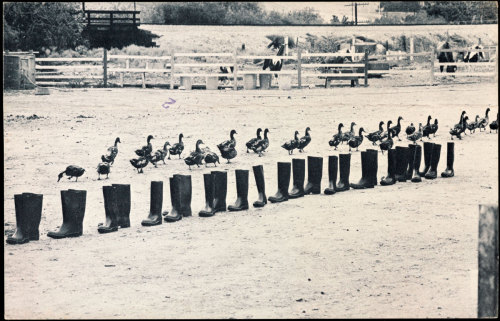 Eleanor Antin100 BOOTS Move On 1971 – 1973Halftone reproduction Getty Research Institute, Los Angeles, CA © Eleanor Antin (via Exhibition: 'Pacific Standard Time: Art in Los Angeles 1950-1980′ at Martin-Gropuis-Bau Berlin « Art Blart)