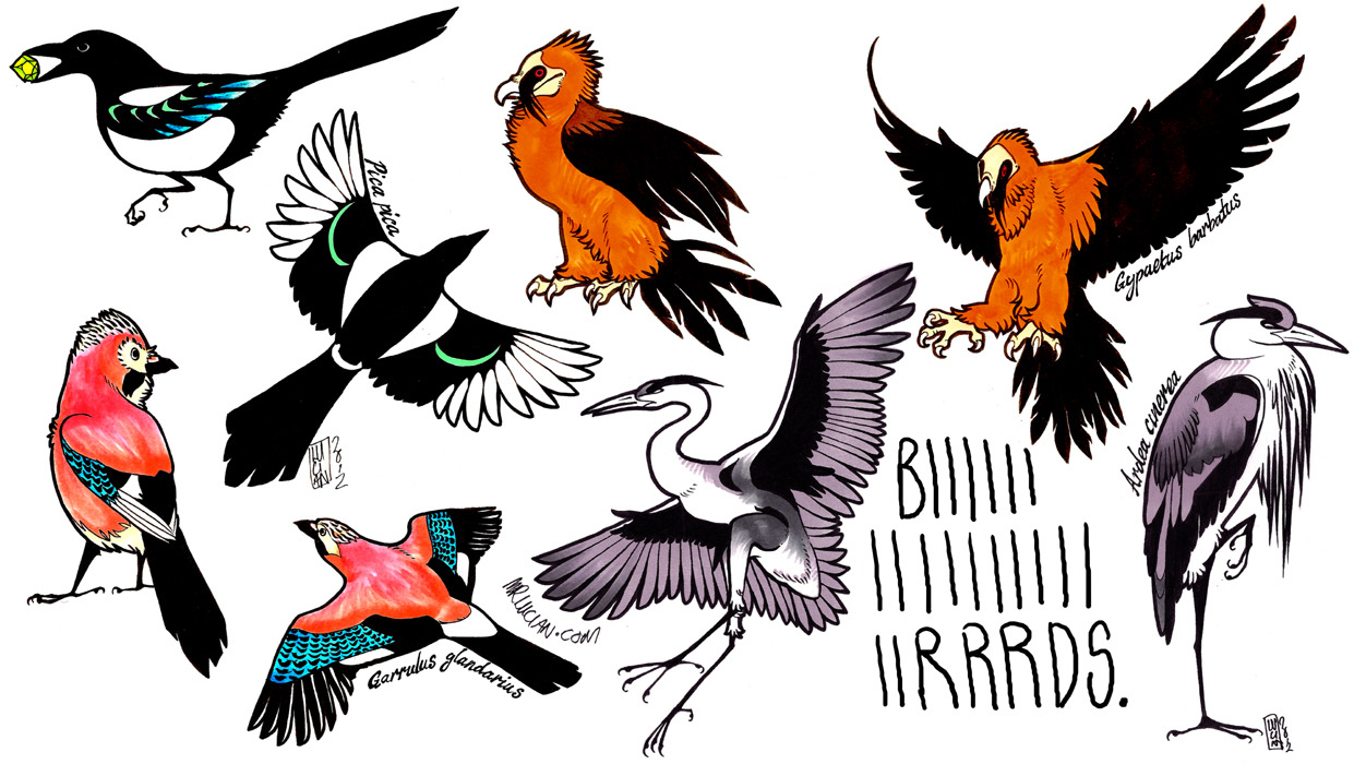 My favourite birds for my own tattooing purposes.  All down my left leg, if you're wondering. Ink and alcohol marker (Letraset and Copic). March - May 2012.