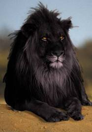 SCAR AWESOME ROYALITY!!!!!!!!!!!!