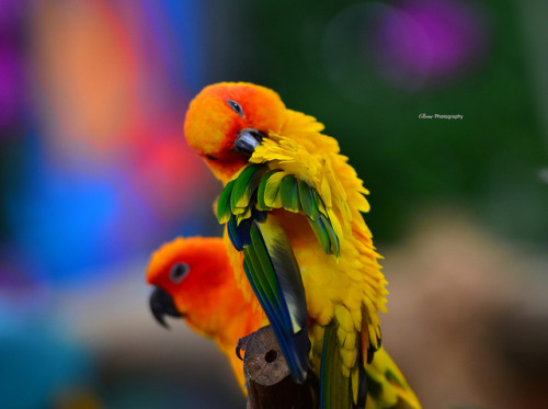 Parrot on Flickr.
