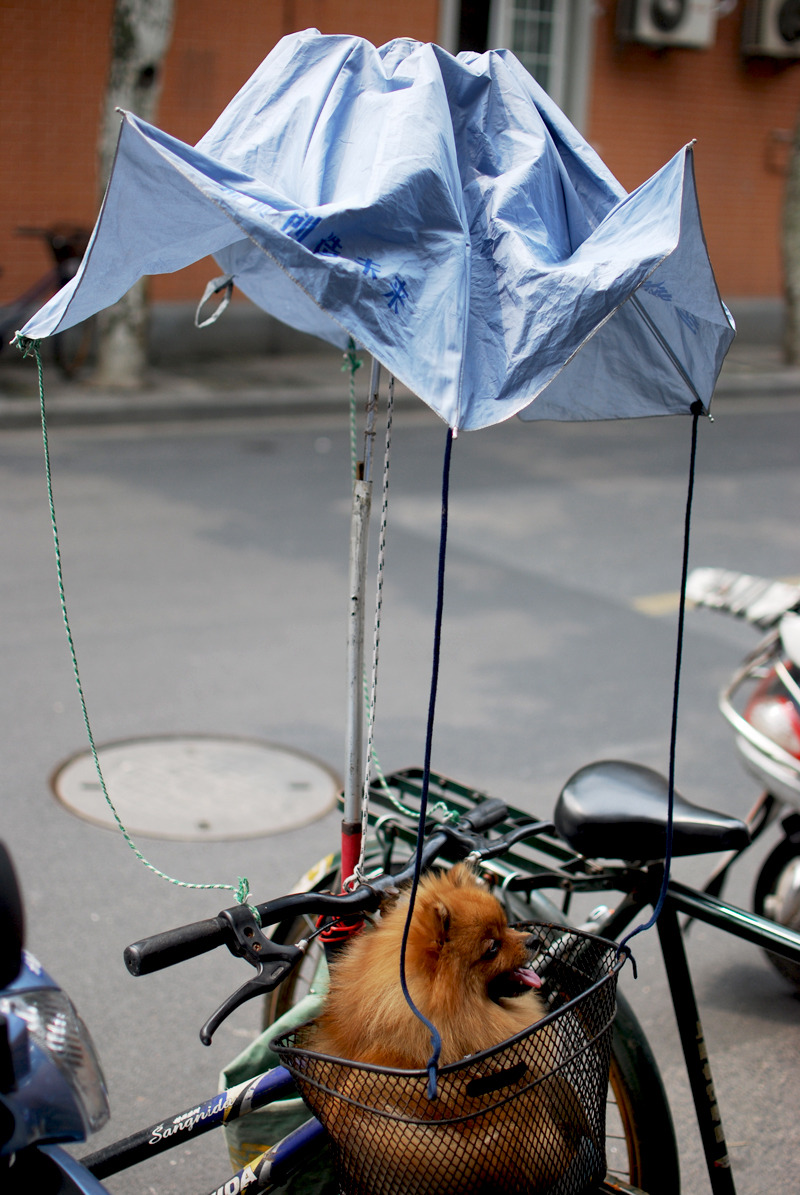 Dog in a basket and strange contraption. Shanghai, China, 2012. Alex Muntean
