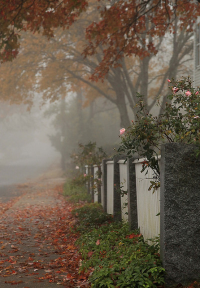 acoastalpointofview:  Foggy day on Westport Point Photo by Cheryl Sparks