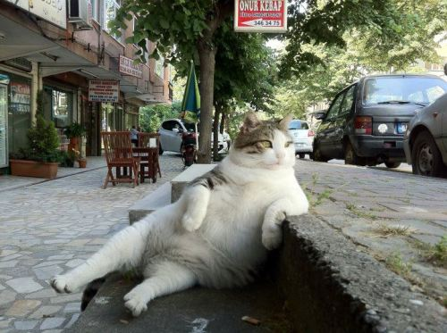 catsbeaversandducks:  Like a boss. Photo found on Sener Kok Facebook