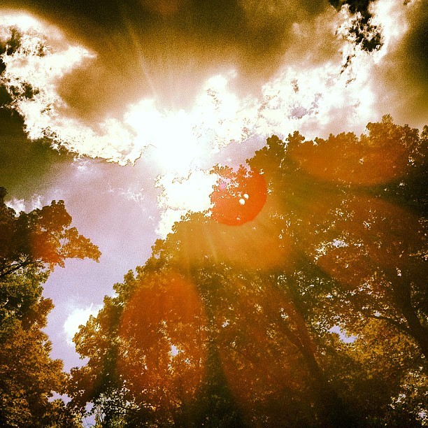 #solar #sun#outdoors #iphonography #trees #sky #kelvin (Taken with instagram)