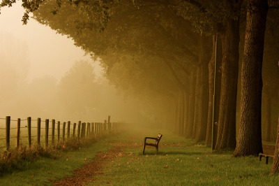 luminica:  Take a seat and Enjoy Autumn! by buteijn on Flickr.