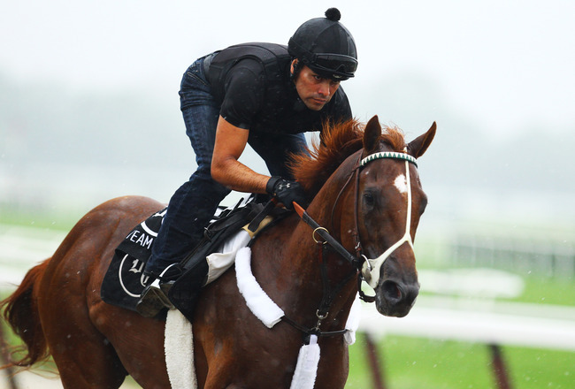 startinggate:  I'll Have Another gallops at Belmont sans nasal strip (Photo by Al Bello)