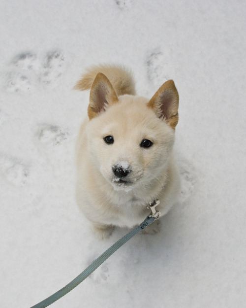 kizatchi:  allofyou:  Snow Princess by SurlyCook on Flickr.  beautiful….  sfdljkmndldnkldnbdlk;nb