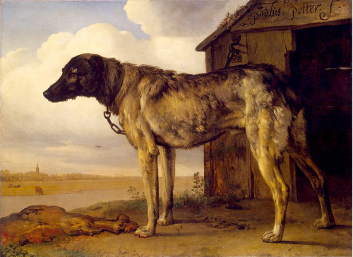 slickwhippet:  Paulus Potter, Wolfhound (1650-52).  via flickr, hat tip to alwaysalbrecht