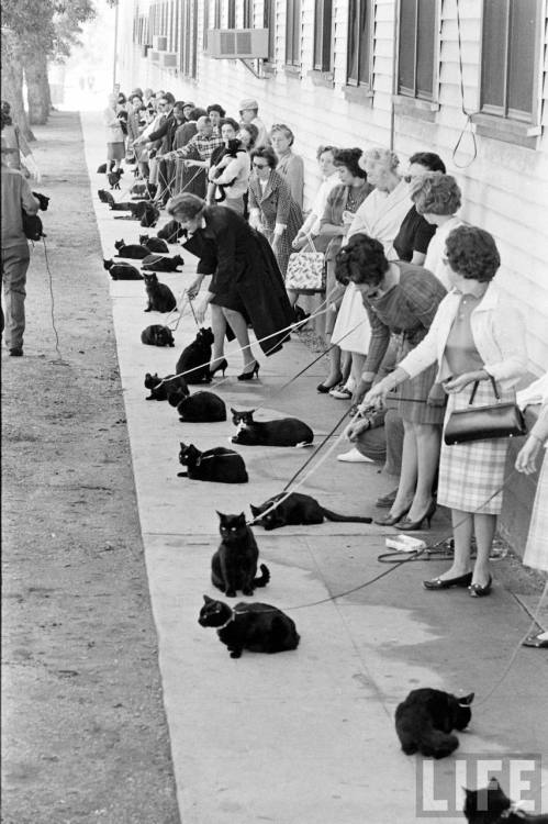 lostsplendor:  Black Cat Auditions, Hollywood c. 1961 (via Retronaut)