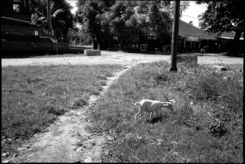 [Ujung Genteng] 2012 on Flickr.Via Flickr: Leica M6 - Summicron 35mm Asph - Lucky SHD100@400
