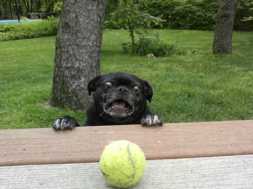 funkyfest:  I am the dog and the ball is my life.