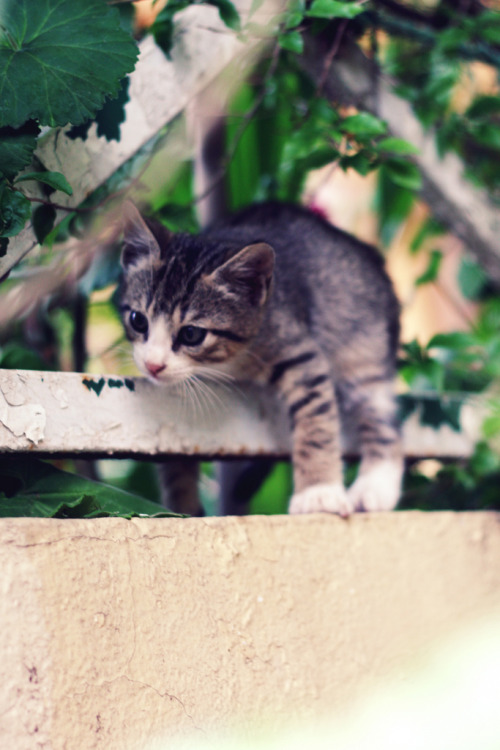 photogenicfelines:  IMG_71700 (by Céline-L♡)