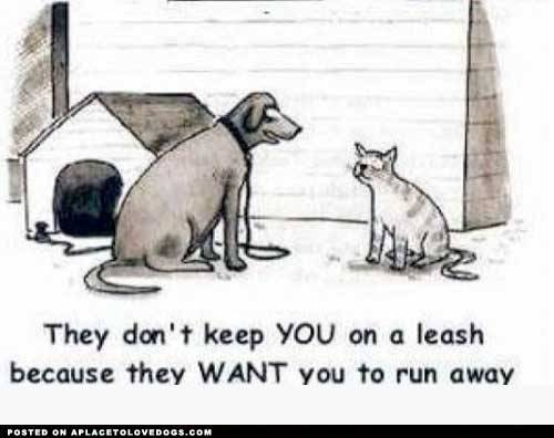 HAHAHAHAHAHA because cats < dogs