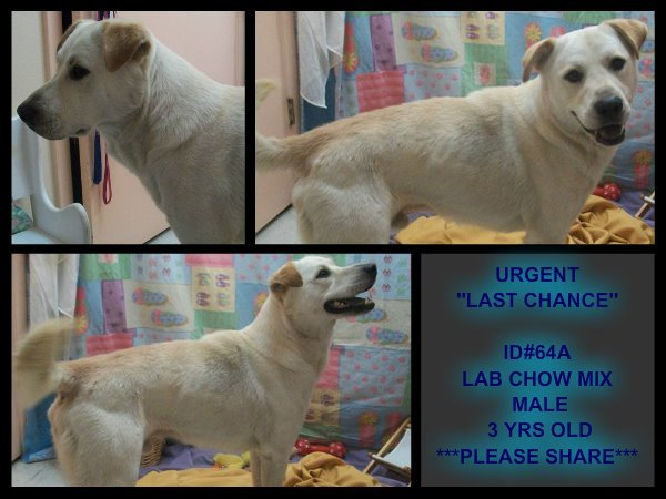 animalavenger:  This is D2012-3278 the Dog D2012-3278 will be put down at Lake County Animal Services on June 6, 2012     Age: 3 Years    Gender: Male    Kennel #D2012-3278  Personality / Description This gorgeous, healthy boy dies tomorrow for no other reason than there is no space - please call or email the shelter NOW if you can save him!!!!    Where to Adopt Lake County Animal Services, Deer Island, FL 32778  For more information, call: (352) 636-3740 or email:williams.denise022@gmail.com