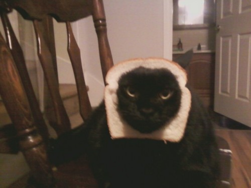 that is not how to make a sandwich cat.