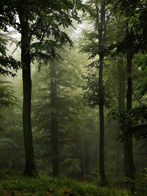 archenland:  High Forest… in the rain (by JoannaRB2009)