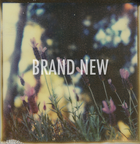 via dolliecrave the band or just saying BRAND NEW