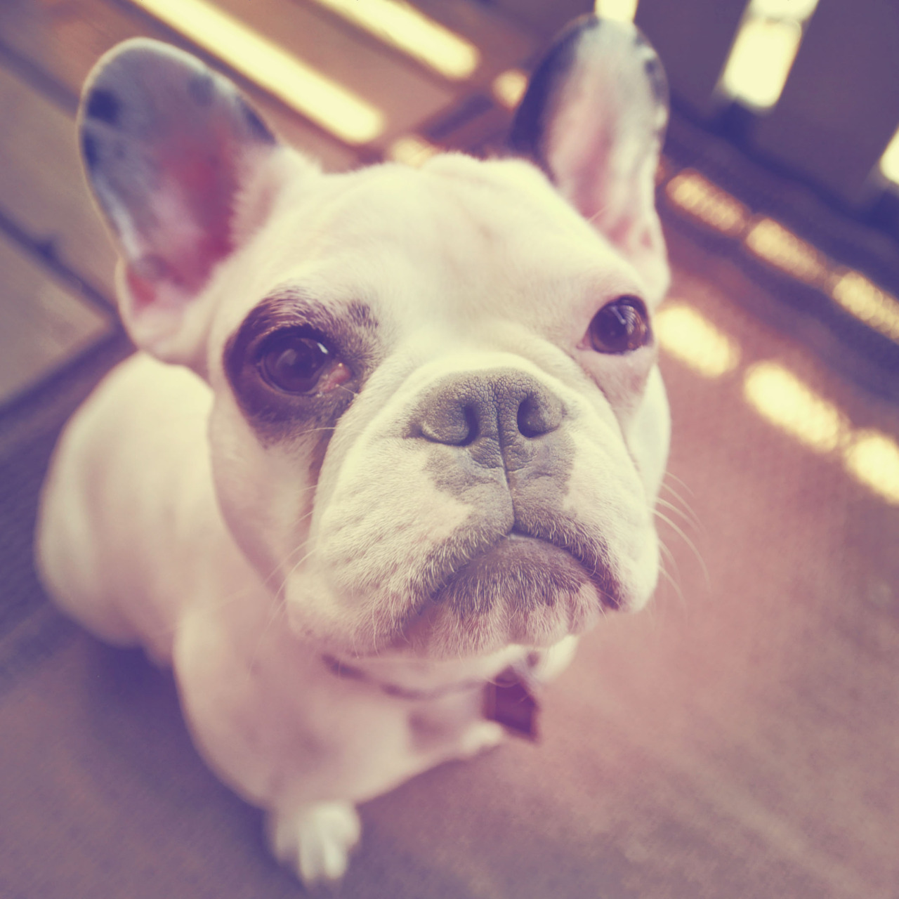 leroythefrenchie:  My aunt Lauren Gonzales took this. I'm handsome…I know.