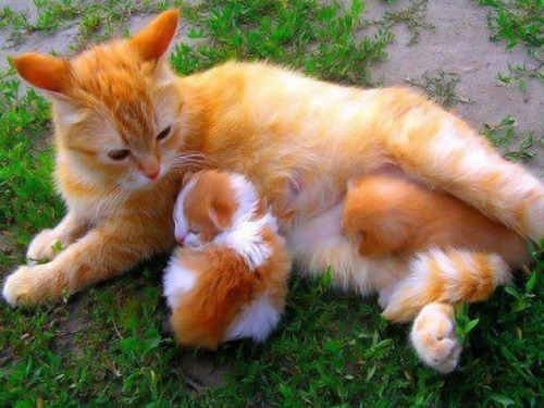 Amazing Colored Kitties via:cutestpaw. Todays Cuteness :)