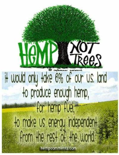 hemp also reconstitutes soil after over-use by bad agricultural practices.