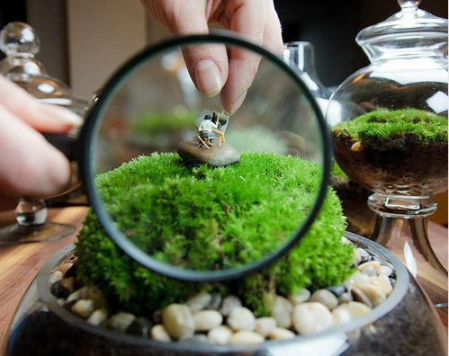 Through a magnifying glass is a magnificent mini man