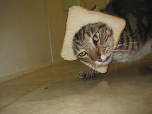 Kitty loves to get breaded!