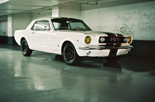 carpr0n:  White widow Starring: Ford Mustang (by Van Ray)