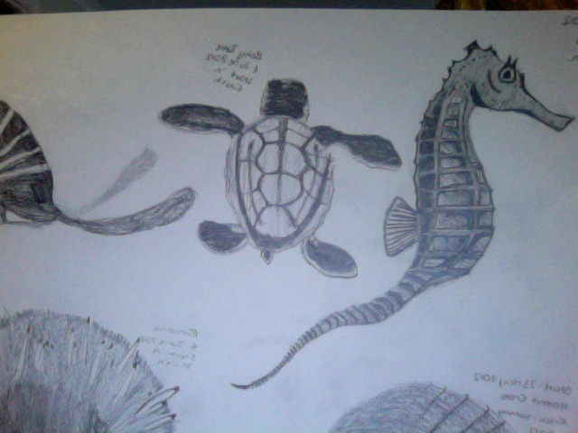 My Drawings :)