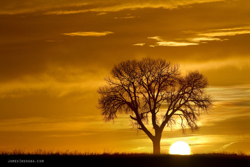 Golden Sunrise Silhouette by Striking Photography by Bo on Flickr.