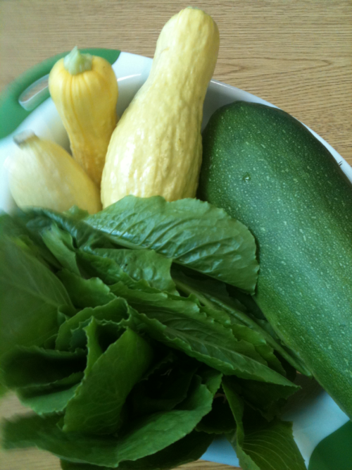 Third harvest from Porter Libray SERVE garden. Five summer squash, one large zucchini and a nice pile of romaine lettuce!