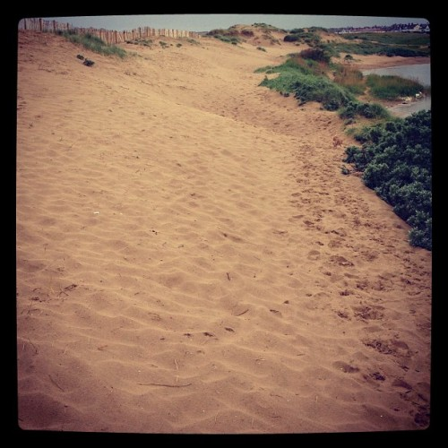 7am #run #sand #nature #lake #crosby #dog (Taken with instagram)