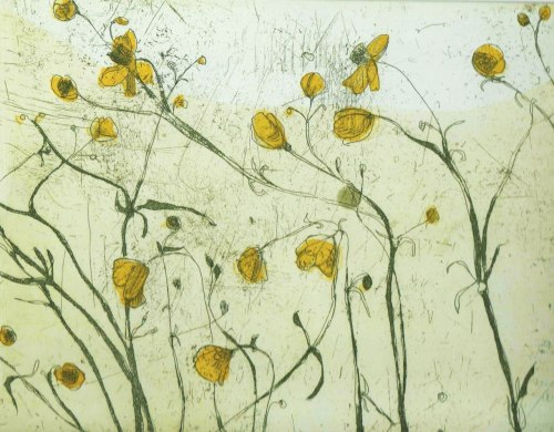 Buttercup (etching) – Marta Wakula-Mac (Polish, b.1979)