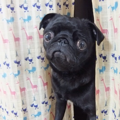 mugsofpugs:  What is seen cannot be unseen.