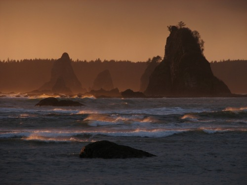Olympic National Park is a collection of very diverse landscapes such as mountains, beaches, and forests. It has also been home to many different groups of people for generations, starting with the hunter-gatherers 10,000 years ago up to today. The Park is currently home to multiple American Indian tribes such as the Hoh, the Makah, and the Quileute. These tribes work together with the National Park Service to preserve the cultural history of the park and its resources. A landmark case in 1974 gave local tribes the right to fish in the park. However, due to the dwindling of fish levels in the area, both the tribes and the park are devoted to protecting these fish communities.Photo: National Park Service