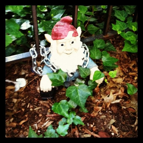 The Kingslayer in Game of Garden Gnome Thrones (Taken with instagram)