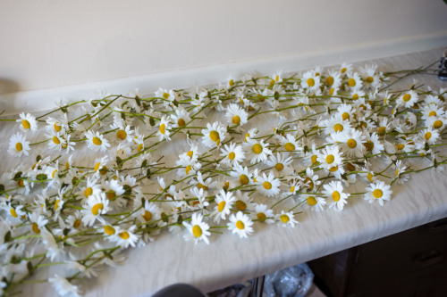 The giant daisy chains that me and my wonderful, multi-talented stylist Jack Baxter spent two hours making this morning.