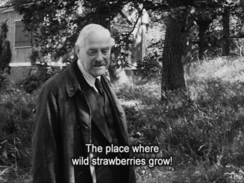 Wild Strawberries (Ingmar Bergman)