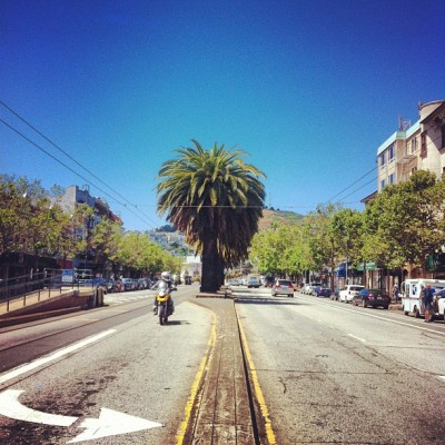 Palm trees along Market and 16th - Castro, San Francisco (Taken with instagram)